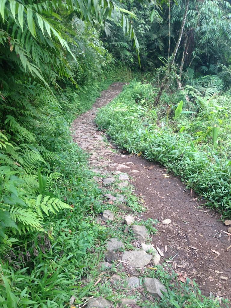 Track menuju curug sawer