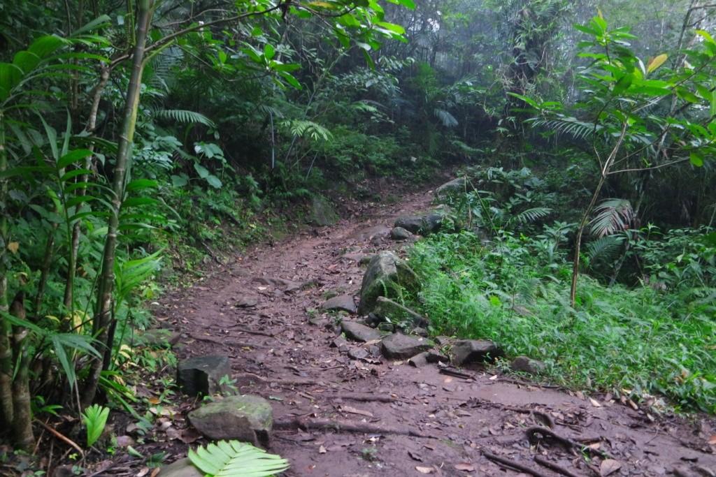 Medan pendakian hutan