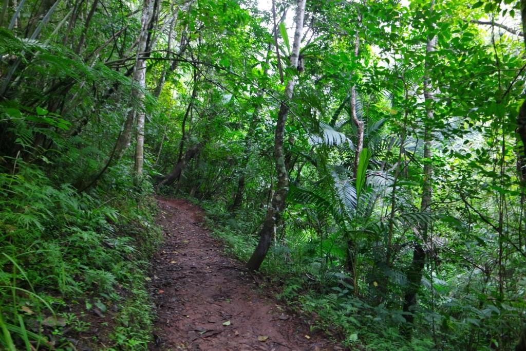 Suasana hutan saat trekking